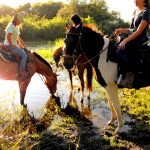 A&A Adventure Horse Trail Rides